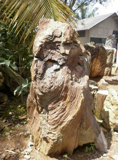Petrified Wood Fossil