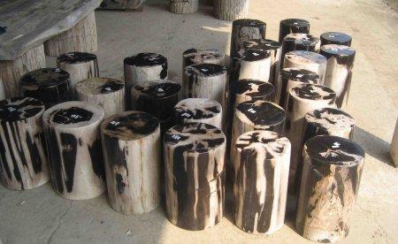 Petrified Wood for sale