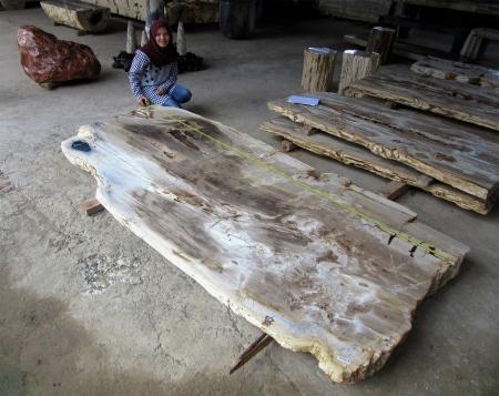 IndoGemstone Petrified Wood